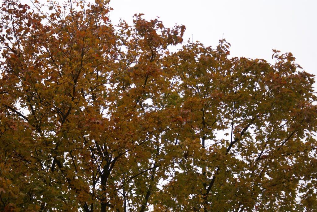 Осень--