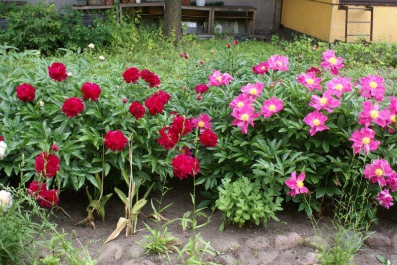 лето для цветов