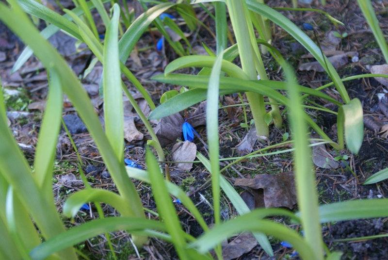 Маленькие синии