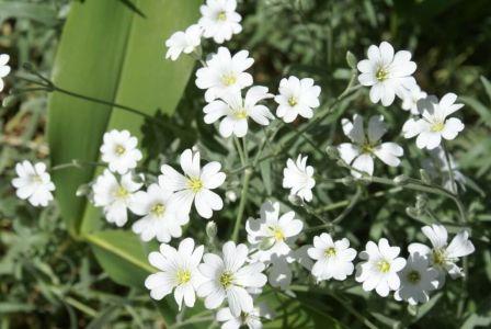 Белый благородный цвет
