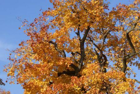 Смена сезона через яркие цвета